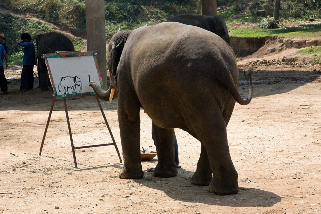 Elephant Self Portrait by Flickr User Cybjorg CC License = Attribution, Non Commercial, No Derivatives
