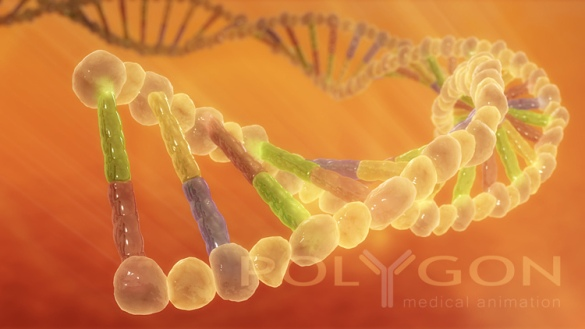 DNA Strand by Flickr User Polygon Medical Animation, CC License = Attribution, Noncommercial, No Derivative Works
