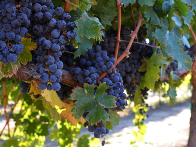 Heard it Through the Grapevine by Flickr User Sonny Lazzeri, CC License = Attribution, Noncommercial, No Derivative Works