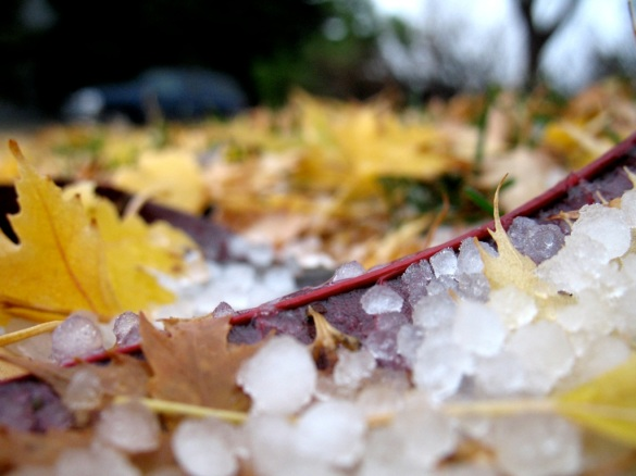 Leaves and Hail by Flickr User Michael J, CC License = Attribution, Noncommercial