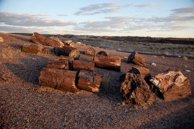 Petrified Forest Logs by Flickr User Morten Rand-Hendriksen CC License = Attribution, Noncommercial, No Derivative Works
