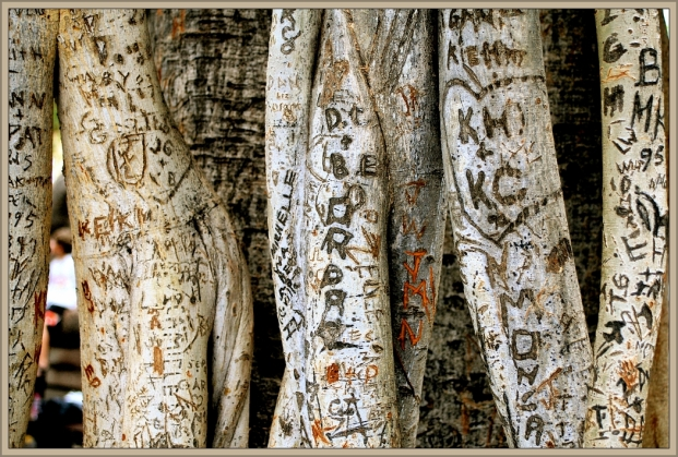 Tree Scars by Flickr User Randy Robertson, CC License = Attribution