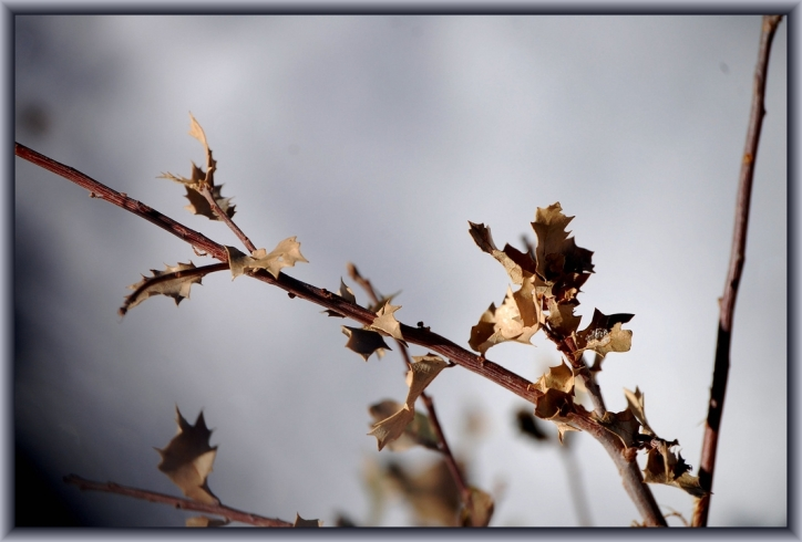 Dried Leaves by My Sister & Flickr User Candiece Nelson, CC License = Attribution