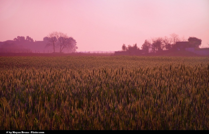 Field at Sunrise by Flickr User Moyan Brenn, CC License = Attribution