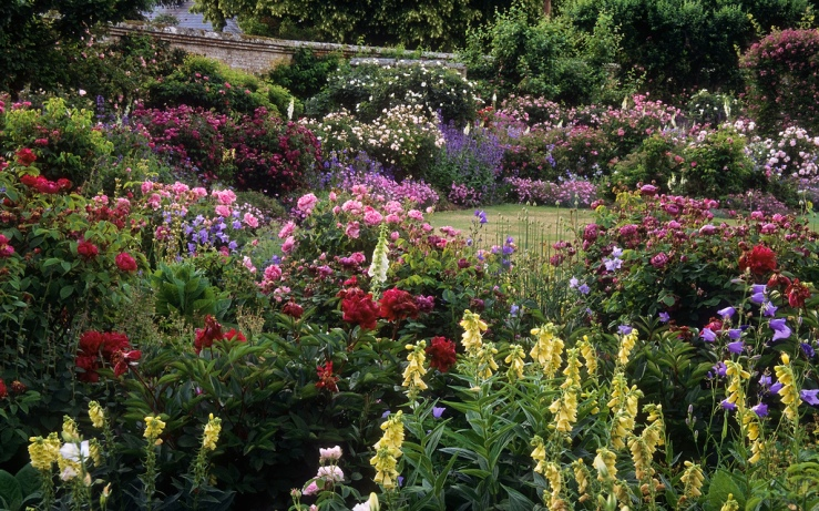 Mottisfont Abbey Rose Garden by Flickr User ukgardenphotos, CC License = Attribution, Noncommercial, No Derivative Works Click image to open new tab/window to view original image and to access user's full photo stream at Flickr.