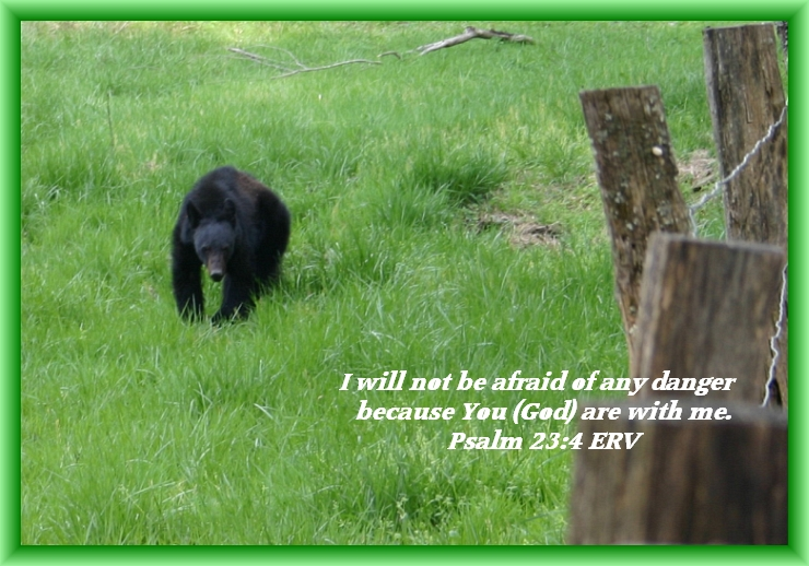 Bear Just Out of Hibernation on Cade's Cove Loop in Tennessee, By Crystal A Murray, CC License Attribution, Noncommercial, Share Alike