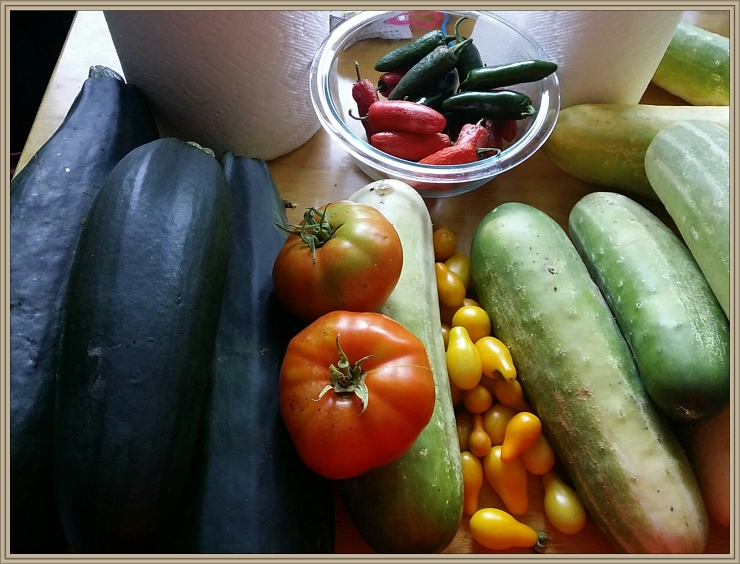 David and Crystal's Harvest of Joy--1st Garden, Summer 2014, Dutch Street, CC License = Attribution, Noncommercial, Share Alike
