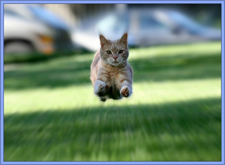 It's a Bird ... It's a Plane ... It's Super Jimmy!!! by Flickr User Kerri Lee Smith, CC License = Attribution, Noncommercial, Share Alike