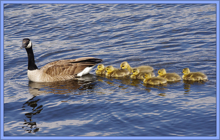 Follow the Leader by Flickr User Blair Gannon, CC License = Attribution