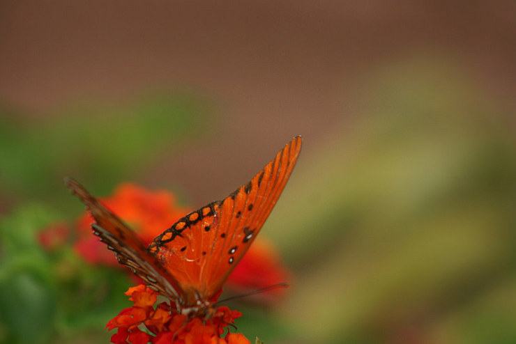 Moth by My Sister and Flickr User Candiece N, CC License = Attribution, Noncommercial, No Derivative Works