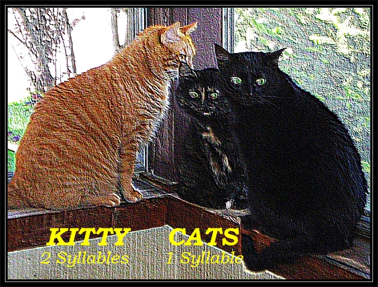 Three Kitty Cats in the Window, Rock Texture, Syllable Text, by Crystal A Murray, All Rights Reserved