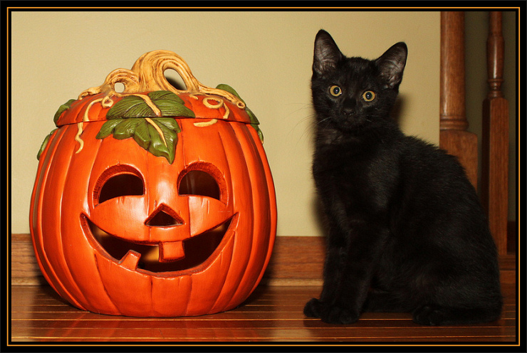 Halloween Kitten by Flickr Users Bill & Vicki T aka Great Grandpa & Grandma T, CC License = Attribution